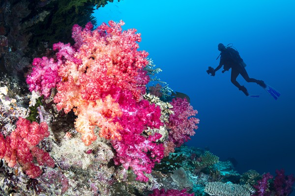 Diver observing a beautiful coral reef